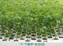 Planta ecológica - Tecnobioplant