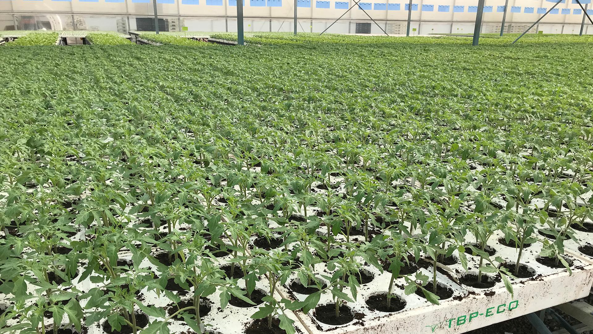 tecnobioplant-planta-ecologica-01