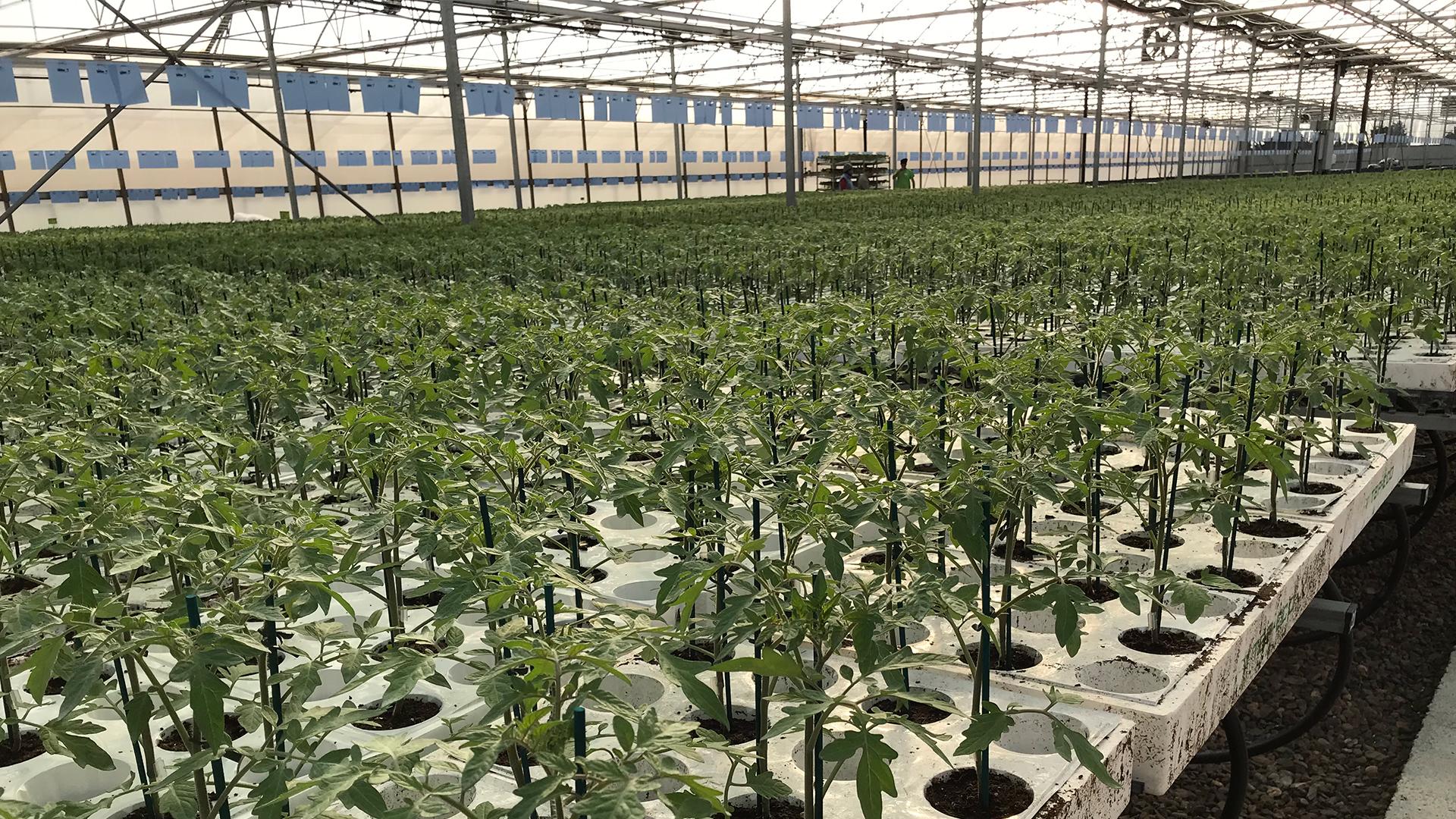tecnobioplant-planta-ecologica-02