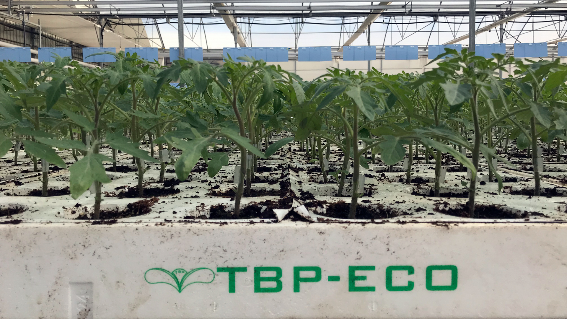 tecnobioplant-planta-ecologica-03