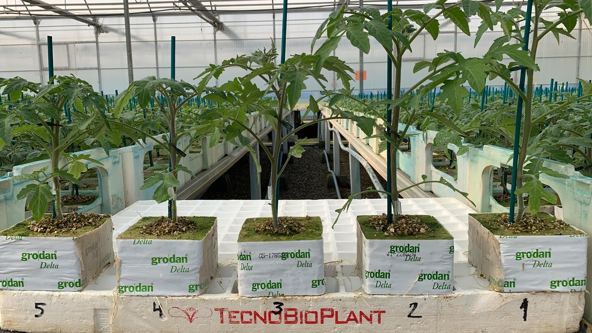 tecnobioplant-planta-horticola-03