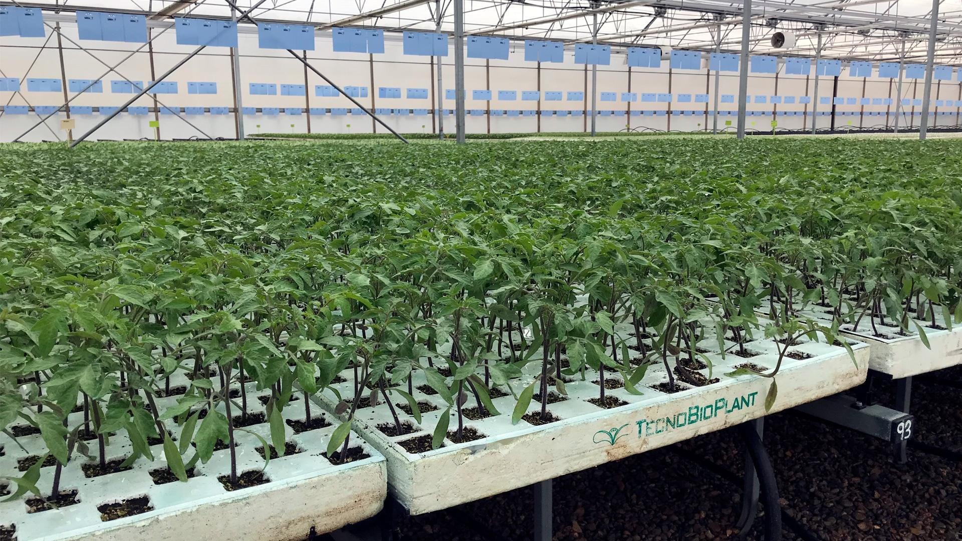 tecnobioplant-planta-horticola-06