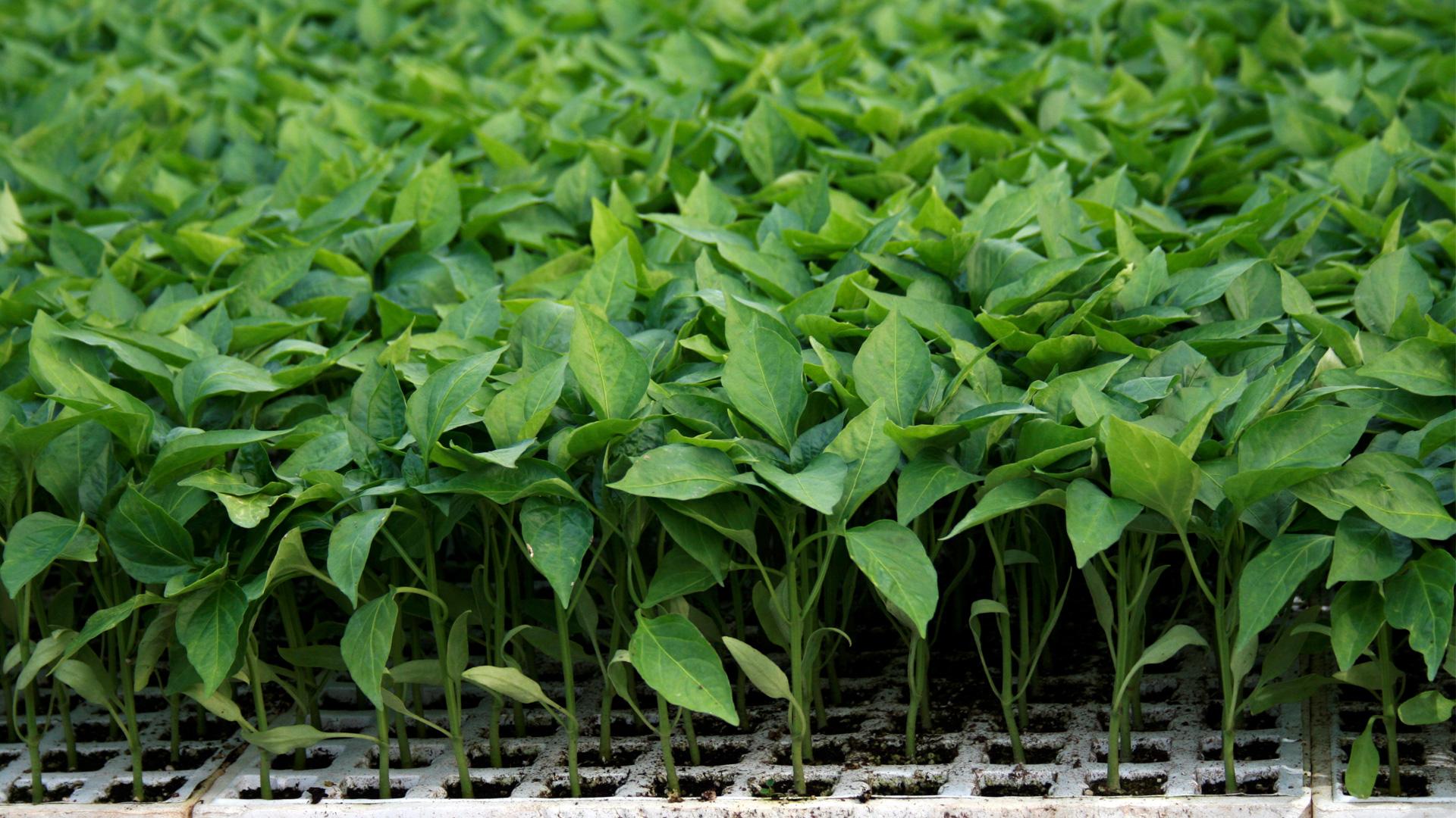 tecnobioplant-planta-horticola-07